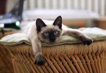 les-chats-comportements
