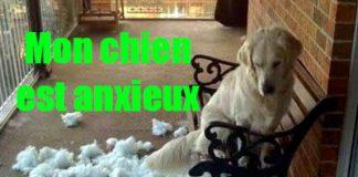 les-signes-de-mon-chien-anxieux-traitement-solution
